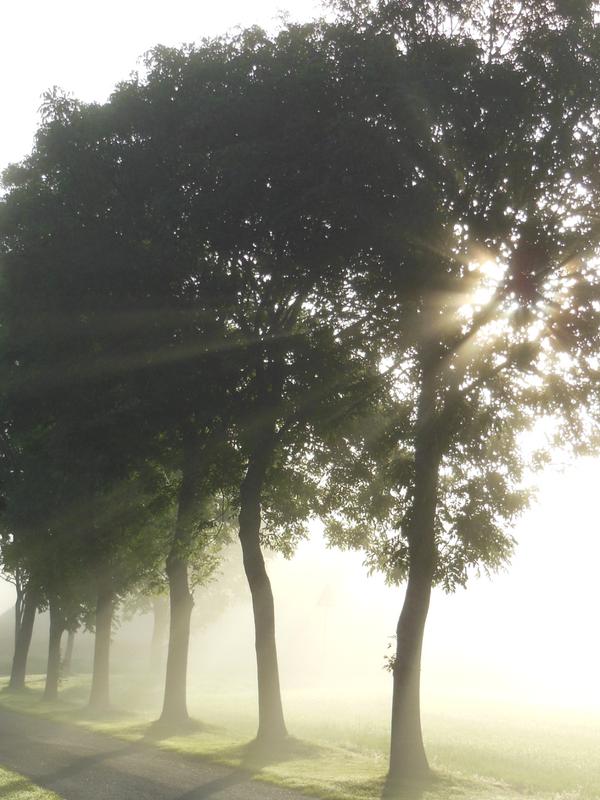 stråler gennem træerne i morgendiset